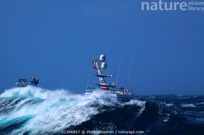 """Fishing vessel """"Ocean Harvest"""" in huge waves on the North Sea, September 2010. Property released.  ,  BOATS,EUROPE,EXTREME,FISHING BOATS,HEAVY SEAS,NORTH SEA,OBSCURED,PROFILE,STORMS,TRAWLERS,WAVES,WEATHER,WORKING BOATS,WORKING-BOATS ,core collection xtwox  ,  Philip Stephen"""