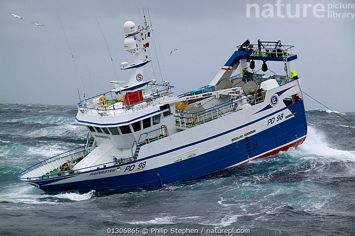"""Fishing vessel """"Harvester"""" heaving trawl wire onboard on the North Sea, September 2010. Property released.  ,  BOATS,EUROPE,EXTREME,FISHING,FISHING BOATS,HEAVY SEAS,NORTH SEA,NOSE DIVING,PROCEDURES,PROFILE,STORMS,TRAWLERS,WEATHER,WORKING BOATS,WORKING-BOATS  ,  Philip Stephen"""
