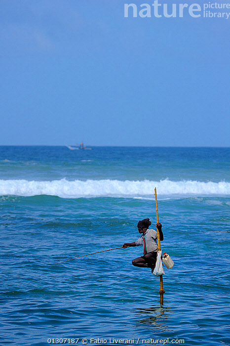 Traditional fishermen of Weligama, seated on long poles, fishing with rods, Sri Lanka, June 2010  ,  ASIA,FISHING,INDIAN SUBCONTINENT,MEN,PEOPLE,SEA,SRI LANKA,TRADITIONAL,TRIBES,VERTICAL,WATER,INDIAN-SUBCONTINENT,core collection xtwox  ,  Fabio Liverani
