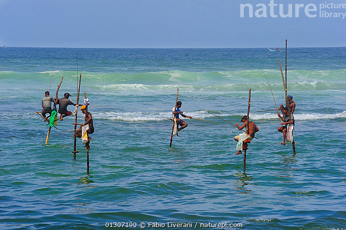 Traditional fishermen of Weligama, seated on long poles, fishing with rods, Sri Lanka, June 2010  ,  ASIA,COASTS,FISHING,INDIAN SUBCONTINENT,MEN,PEOPLE,SEA,SRI LANKA,TRADITIONAL,TRIBES,WATER,INDIAN-SUBCONTINENT,core collection xtwox  ,  Fabio Liverani