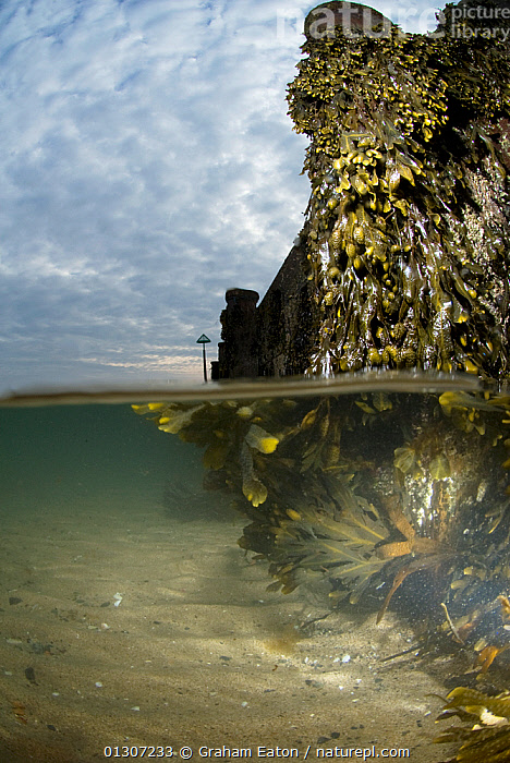 Split-level image of Seaweed growth on a groyne, Abersoch, Wales, April 2010  ,  ATLANTIC,BARRIERS,COASTS,MARINE,RIPPLES,SEAWEED,SPLIT LEVEL,STRUCTURES,TEMPERATE,UK,WALES,WATER,Plants,Europe,United Kingdom,core collection xtwox  ,  Graham Eaton