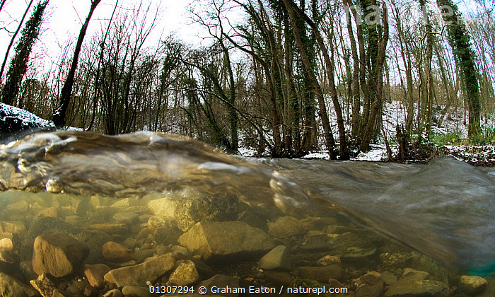 A split-level view of a fast flowing limestone stream in a woodland valley, River Aly, Clwyd, Wales, UK. December 2009.  ,  EUROPE,LANDSCAPES,SPLIT LEVEL,STREAMS,TEMPERATE,UK,UNDERWATER,WALES,WATER,WINTER,WOODLANDS,United Kingdom  ,  Graham Eaton