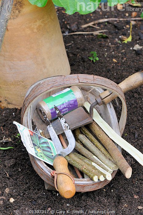 Wooden trug with Hazel (Corylus avellana) stick markers, garden twine, seeds & tools, England, UK, May  ,  BETULACEAE,DICOTYLEDONS,EDIBLE,ENGLAND,FORK,GARDEN,GARDENING,GARDENS,ITEMS,LABELS,PLANTS,SPRING,TOOLS,TROWEL,UK,VERTICAL,Europe,United Kingdom  ,  Gary K. Smith