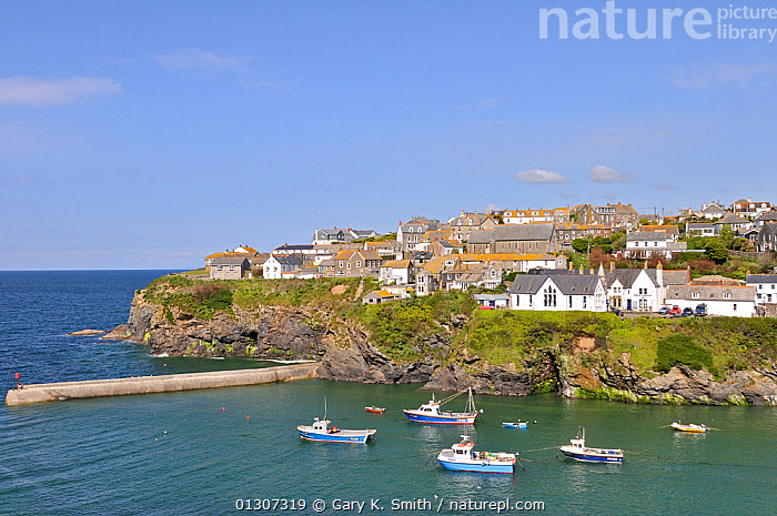 View of Port Isaac harbour, with boats and coastline, North Cornwall, UK, May 2010  ,  BOATS,COASTS,EUROPE,FISHING,HARBOURS,HISTORIC,LANDSCAPES,PICTURESQUE,TOWNS,TRADITIONAL,UK,VILLAGE,United Kingdom  ,  Gary K. Smith
