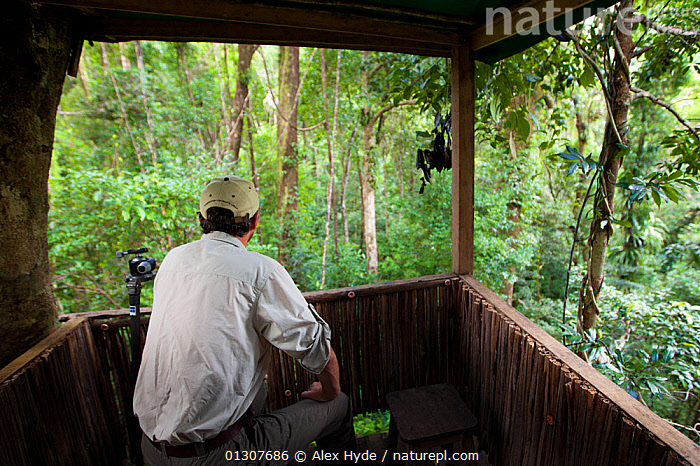 Man observing lowland rainforest from canopy platform, Masoala Peninsula National Park, north east Madagascar, October 2009  ,  CANOPY,ECOTOURISM,HIDES,MADAGASCAR,MAN,NP,OBSERVATION,OUTDOORS,PEOPLE,RESERVE,TROPICAL RAINFOREST,WATCHING,National Park  ,  Alex Hyde
