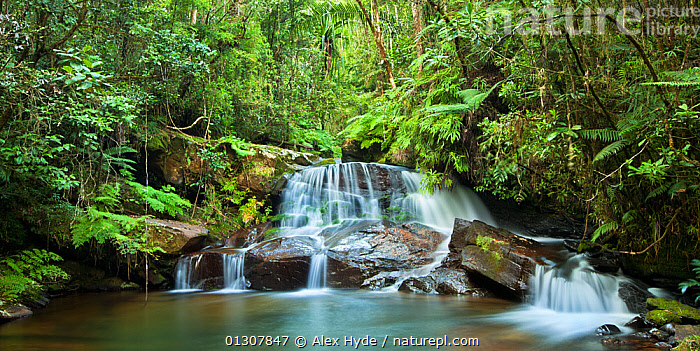 Sacred waterfall and pool in montane rainforest. Andasibe-Mantadia NP, Eastern Madagascar, October 2009, HABITAT,LANDSCAPES,MADAGASCAR,NP,RESERVE,RIVERS,TROPICAL RAINFOREST,WATER,WATERFALLS,National Park, Alex Hyde