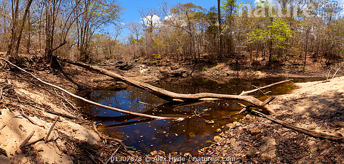 Shrinking waterhole in dry riverbed, dry deciduous forest, Kirindy Forest. Western Madagascar. Composite image, October 2009, DRY SEASON,LANDSCAPES,MADAGASCAR,RESERVE,RIVERS,TROPICAL DRY FOREST,WATER, Alex Hyde