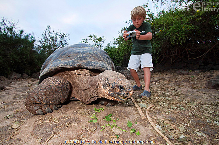 Young boy taking photo of Galapagos giant tortoise (Geochelone elephantopus) at Charles Darwin Research Station in Puerto Ayora, Santa Cruz Island, Galapagos, Ecuador. Model released., BOYS,CHELONIA,CHILDREN,CONCEPTS,ECUADOR,GALAPAGOS,GEOCHELONE NIGRA,INTERACTION,PACIFIC ISLANDS,PEOPLE,PHOTOGRAPHY,REPTILES,SOUTH AMERICA,TORTOISES,VERTEBRATES,SOUTH-AMERICA, David Fleetham