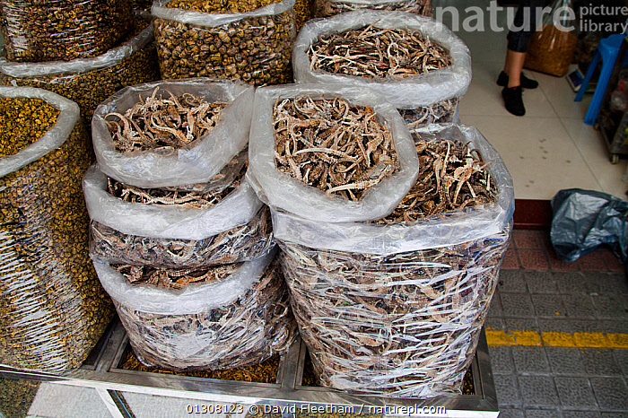 Bags full of dried Seahorse (Hippocampus) for sale at a medicine shop in Guangzhou, China. Seahorses are dried for use as aphrodisiacs in Chinese medicine., ASIA,CHINA,FISH,MARINE,MARKETS,MEDICAL,MEDICINAL,OSTEICHTHYES,SEAHORSES,TRADITIONAL,VERTEBRATES,WILDLIFE TRADE, David Fleetham