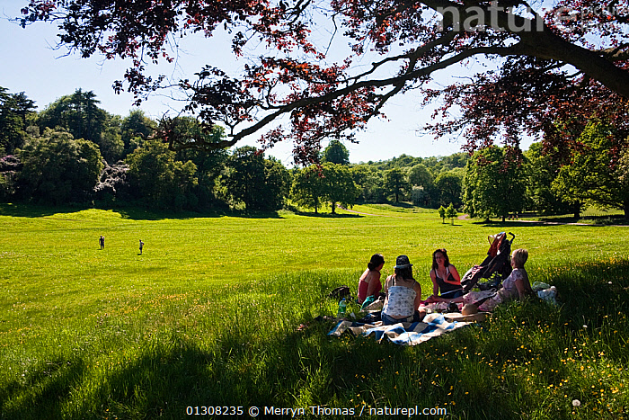 People picnicing in meadow, Ashton Court, Bristol, England, UK. May 2010. Editorial use only., CITY PARK,COUNTRYSIDE,EUROPE,FRIENDS,GROUPS,LANDSCAPES,MEADOWLAND,OUTDOORS,PARKS,PEOPLE,PICNIC,SUMMER,TREES,UK,URBAN,Grassland,PLANTS,United Kingdom, Merryn Thomas