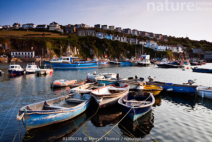 Boats moored in Mevagissey harbour, Cornwall. June 2010., BOATS,BUILDINGS,COASTS,EUROPE,FISHING,HARBOURS,HOUSES,LANDSCAPES,PICTURESQUE,QUAINT,TOWNS,UK,United Kingdom,core collection xtwox, Merryn Thomas