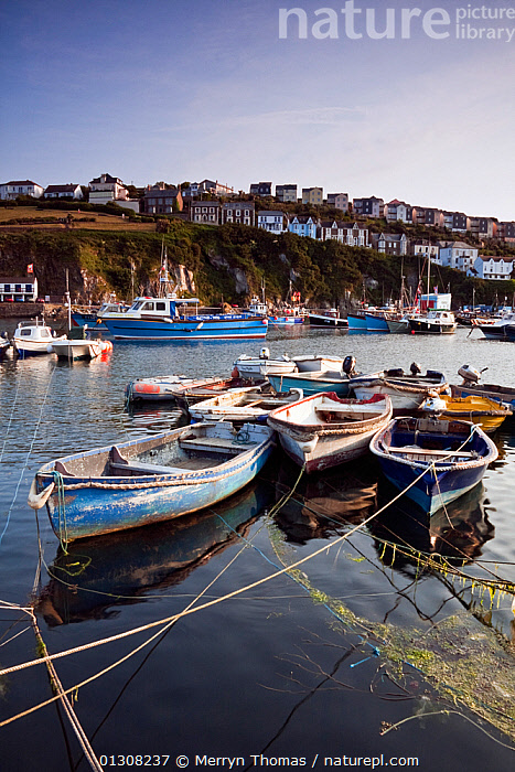 Boats moored in Mevagissey harbour, Cornwall. June 2010., BOATS,BUILDINGS,COASTS,ENGLAND,EUROPE,HARBOURS,HOUSES,LANDSCAPES,PICTURESQUE,QUAINT,TOWNS,UK,VERTICAL,United Kingdom,core collection xtwox, Merryn Thomas