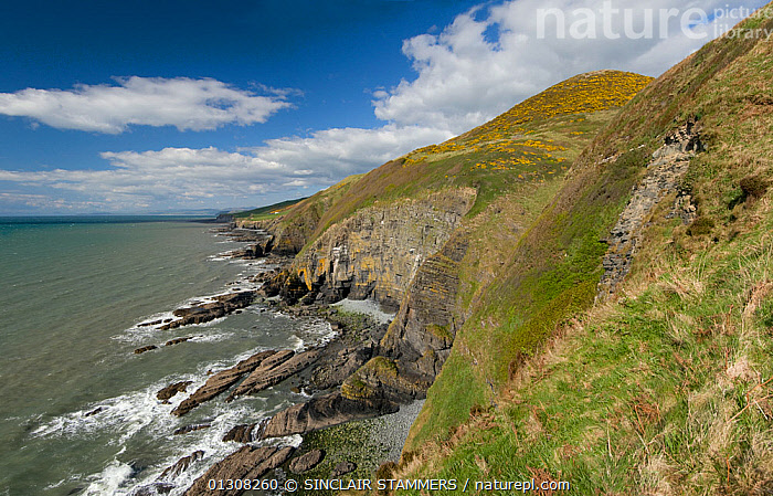 View of coastline at Penderi Cliffs nature reserve, showing sediment layers which are devoid of fossils, Ceredigion, West Wales, UK, May 2010, CLIFFS,DRAMATIC,EUROPE,LANDSCAPES,PANORAMIC,RESERVE,SEA,UK,WALES,WATER,Geology,CONCEPTS,United Kingdom, SINCLAIR STAMMERS