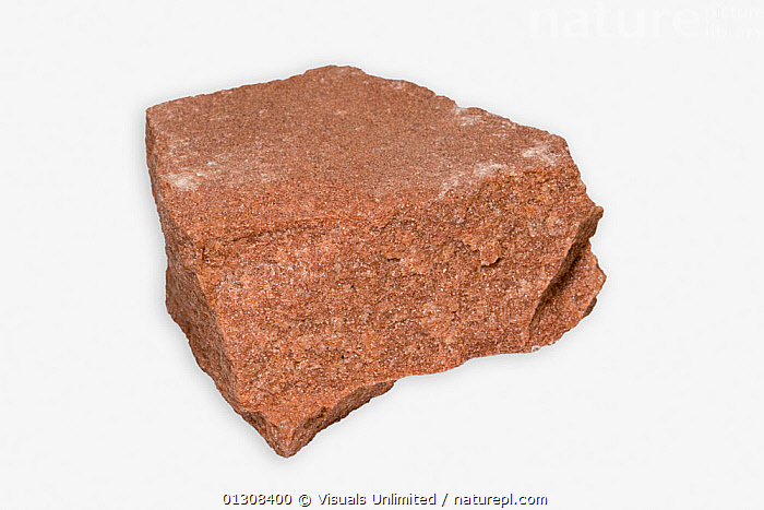 Sandstone specimen., CLOSE UP,COLOR,EARTH,GEOLOGY,IMAGE,ONE,PHYSICAL,RED,ROCK,ROCKS,SANDSTONE,SCIENTIFICA,SEDIMENTARY,SHOT,STUDIO,WHITE, Visuals Unlimited