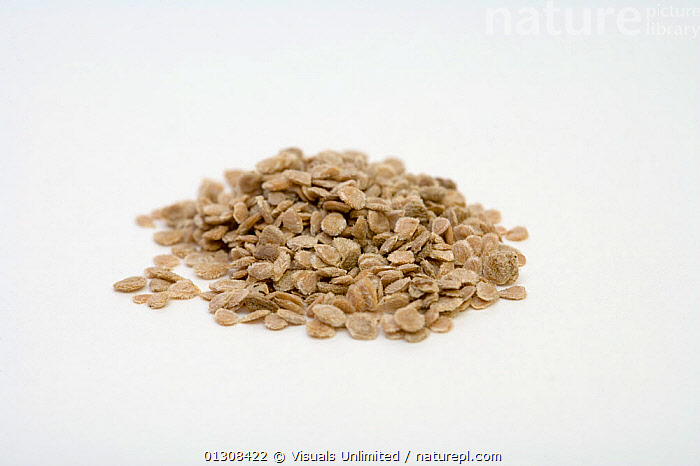 Tomato seeds (Lycopersicon esculentum)., AGRICULTURE,BOTANY,CLOSE UP,COLOR,DRINK,EATING,ESCULENTUM,FOOD,HEALTHY,IMAGE,LARGE,LYCOPERSICON,PILE,PLANTS,RAW,SCIENTIFICA,SEED,SEEDS,SHOT,STUDIO,TOMATO,TOMATOES,WHITE,WHOLE, Visuals Unlimited