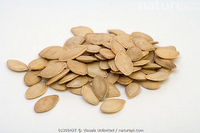 Squash seeds., AGRICULTURE,BOTANY,CLOSE UP,COLOR,CUCURBITA,EATING,FRUIT,FRUITS,HEALTHY,HEAP,IMAGE,LARGE,OUTDOORS,PILE,PLANTS,SCIENTIFICA,SEED,SEEDS,SHOT,SQUASH,STUDIO,VEGETABLE,WHITE, Visuals Unlimited