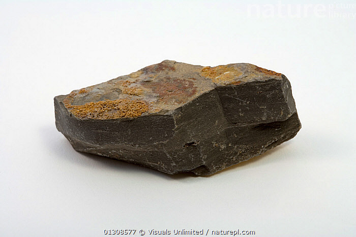 Shale, BROWN,COLOR,GEOLOGY,OBJECT,ROCK,SEDIMENTARY,SHALE,SHOT,SINGLE,STUDIO,WHITE, Visuals Unlimited