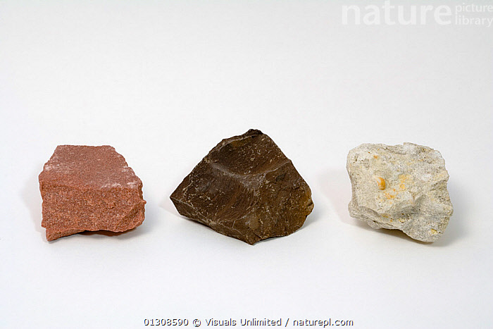 Sedimentary Rocks - from left to right - Sandstone, Oil Shale, Fossil Limestone, CLOSE UP,COLOR,FOSSIL,GEOLOGY,LIMESTONE,MINERALS,OBJECT,OIL,ROCKS,SANDSTONE,SCIENTIFICA,SEDIMENTARY,SHALE,SINGLE,STUDIOSHOT,WHITE, Visuals Unlimited