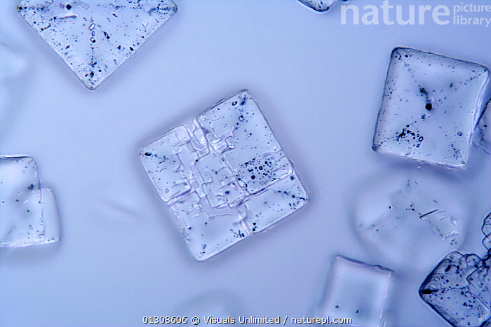 Salt Crystals. LM X25, BLUE,CHEMISTRY,CHLORIDE,CLOSE UP,CRYSTAL,LIGHT,LM,MAGNIFICATION,MEDIUM,MICROGRAPH,MICROSCOPIC,MICROSCOPY,NACL,OBJECTS,SALT,SCIENCE,SCIENTIFIC,SHOT,SODIUM,STUDIO, Visuals Unlimited