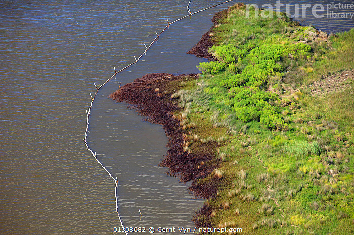 Aerial view of oiled and containment boomed salt marsh in the Baratari Bay area of the Mississippi River delta, contaminated as a result of the BP Deepwater Horizon leak. Plaquemines Parish, Louisiana, USA, July 2010., AERIALS,British Petroleum,COASTS,CRUDE OIL,DEEPWATER HORIZON,disaster,ENVIRONMENTAL,NORTH AMERICA,OIL,POLLUTION,response,RIVERS,salt marshes,USA,WETLANDS, Gerrit Vyn