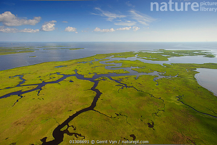 Aerial view of salt marsh in the Baratari Bay area of the Mississippi River delta. Plaquemines Parish, Louisiana. July 2010., AERIALS,contamination,CRUDE OIL,DEEPWATER HORIZON,disaster,ENVIRONMENTAL,FUEL,LANDSCAPES,OIL,POLLUTION,RIVERS,WETLANDS, Gerrit Vyn