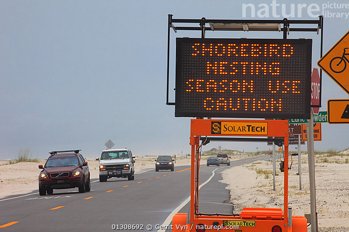 A sign along the road alerting motorists to a Least Tern (Sternula antillarum) and Black Skimmer (Rynchops niger) nesting colony adjacent to the road. Gulf Islands National Seashore, which was affected by the BP Deepwater Horizon oil leak. Florida, USA, June 2010., BIRDS, British Petroleum, CONSERVATION, contamination, DEEPWATER-HORIZON, ENVIRONMENTAL, nesting, NESTS, OIL, POLLUTION, SEABIRDS, SIGNS, spill, TERNS, TRAFFIC, URBAN, VERTEBRATES,North America, Gerrit Vyn
