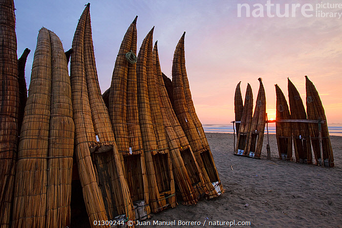 Upturned canoes (caballitos) owned by the Fishermen of Totora, on Pimentel beach at sunset. Chiclayo. Peru November 2009  ,  beach,BEACHES,BOATS,caballito,canoe,CANOES,catalogue3,Chiclayo,COASTS,Evening,FISHING,fishing boat,FISHING BOATS,GROUPS,hand made,LANDSCAPES,large group,large group of objects,local industry,natural fibre,Nobody,outdoors,Peru,Pimentel beach,reeds,SOUTH AMERICA,storage,SUNSET,TRADITIONAL,Travel,TRIBES,upturned ,view to sea,OPEN-BOATS,SOUTH-AMERICA,core collection xtwox  ,  Juan Manuel Borrero