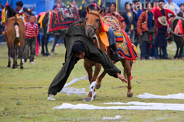 A Khampa warrior, mounted on his running Tibetan horse, tries to catch white scarves laid out on the ground, during the horse festival, near Huangyan, in the Garze Tibetan Autonomous Prefecture in the Sichuan Province, China, June 2010  ,  ACTION,background people,catalogue3,challenge,entertainment,front view,full length,Garze,ground,hanging,Khampa,leaning forward,local tradition,PEOPLE,scarf,scarves,skill,upside down,VERTEBRATES,watching,WHITE,CHINA,festival,Horse,horse festival,HORSES,Huangyan,local custom,MAMMALS,MAN,outdoors,PERISSODACTYLA,riding,RUNNING,Sichuan Province,spectator,Tibetan,tradition,TRADITIONAL,traditional culture,Travel,TRIBES,warrior,Asia,Equines,,Skill, Efficiency,  ,  Kristel Richard
