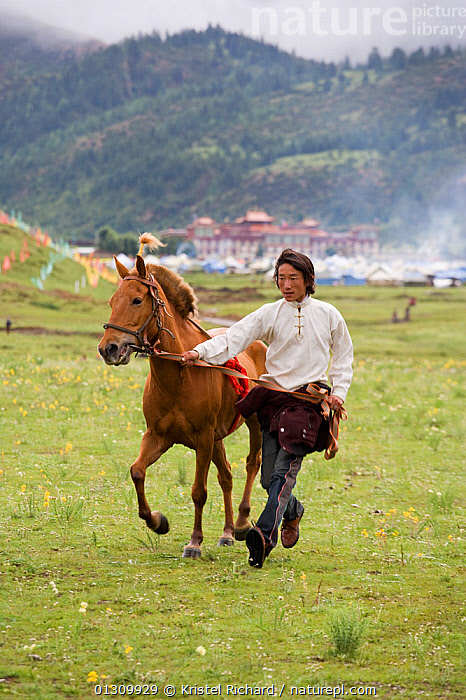 A Khampa warrior leads his Tibetan horse towards the start of the race, during the horse festival, near Huangyan, in the Garze Tibetan Autonomous Prefecture in the Sichuan Province, China, June 2010  ,  animal care,CHINA,Horse,horse festival,HORSES,Huangyan,local custom,MAMMALS,MAN,one animal,one person,outdoors,PERISSODACTYLA,riding,Sichuan Province,Tibetan,Tibetan horse,traditional costume,traditional culture,Travel,TRIBES,VERTICAL,warrior,young adult,catalogue3,front view,full length,Garze Tibetan Autonomous Prefecture,harness,Khampa,LANDSCAPES,local traditional,PEOPLE,traditional dress,trotting,valley,VERTEBRATES,WALKING,Asia,Equines  ,  Kristel Richard