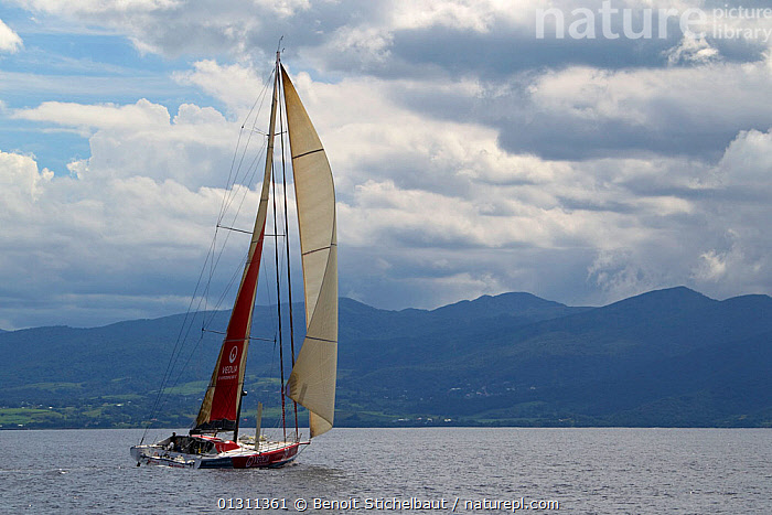 """Monocoque 60 """"Veolia Environment"""" skippered by Roland Jourdain arriving in Guadeloupe as winner of Route du Rhum IMOCA Class. November 2010.  Editorial use only., BOATS,CARIBBEAN,CENTRAL AMERICA,COASTS,GUADELOUPE,LANDSCAPES,OPEN 60,RACES,REAR VIEWS,RUM RACE,SAILING BOATS,WEST INDIES,WINNER,WINNING,YACHTS,SAILING-BOATS,core collection xtwox, Benoit Stichelbaut"""