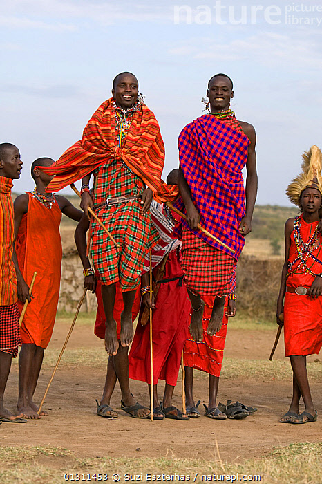 Maasai warriors ceremonial jumping, wearing traditional clothing. Near Masai Mara Reserve, Kenya, East Africa, August 2008, AFRICA,CULTURES,EAST AFRICA,JUMPING,MAASAI,MEN,OUTDOORS,PEOPLE,RED,TRADITIONAL,TRIBES,VERTICAL, Suzi Eszterhas
