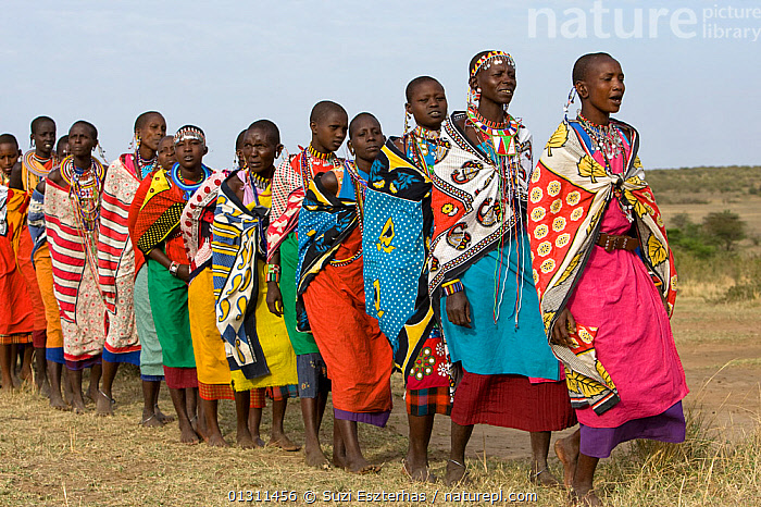 Maasai women  wearing colourful traditional dress, singing and ceremonial dancing. Near Masai Mara Reserve, Kenya, East Africa, August 2008, AFRICA,COLOURFUL,CULTURES,EAST AFRICA,MAASAI,OUTDOORS,PEOPLE,TRADITIONAL,TRIBES,WOMEN, Suzi Eszterhas
