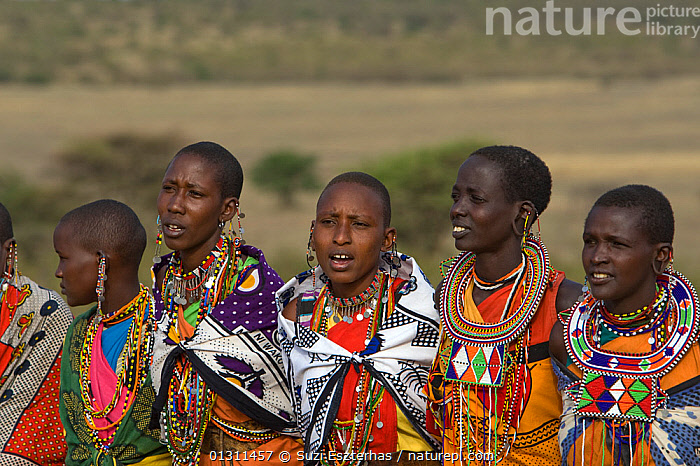 Group of Maasai women ceremonial dancing and singing.Near Masai Mara Reserve, Kenya, East Africa, August 2008, AFRICA,COLOURFUL,CULTURES,EAST AFRICA,GROUPS,MAASAI,OUTDOORS,PEOPLE,PORTRAITS,TRADITIONAL,TRIBES,WOMEN, Suzi Eszterhas
