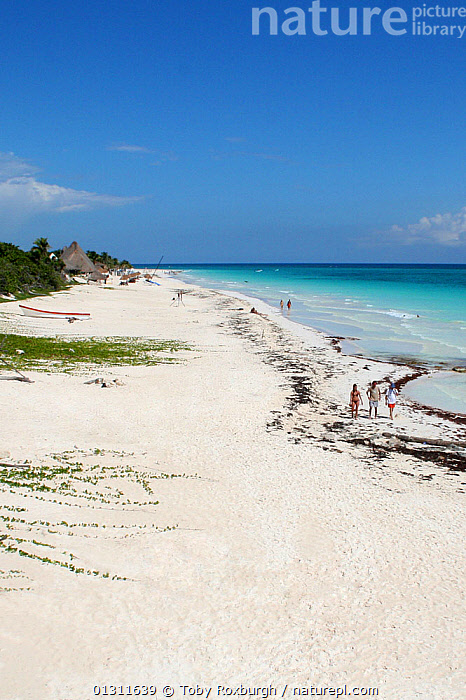 Sandy beach near Tulum, Yucatan,  Mexico, October 2006., ASPIRATIONS,BEACHES,CARIBBEAN,CENTRAL AMERICA,COASTS,HOLIDAYS,LANDSCAPES,MEXICO,PEOPLE,TROPICAL,TURQUOISE,VERTICAL,WEST INDIES,Concepts,CENTRAL-AMERICA,core collection xtwox, Toby Roxburgh
