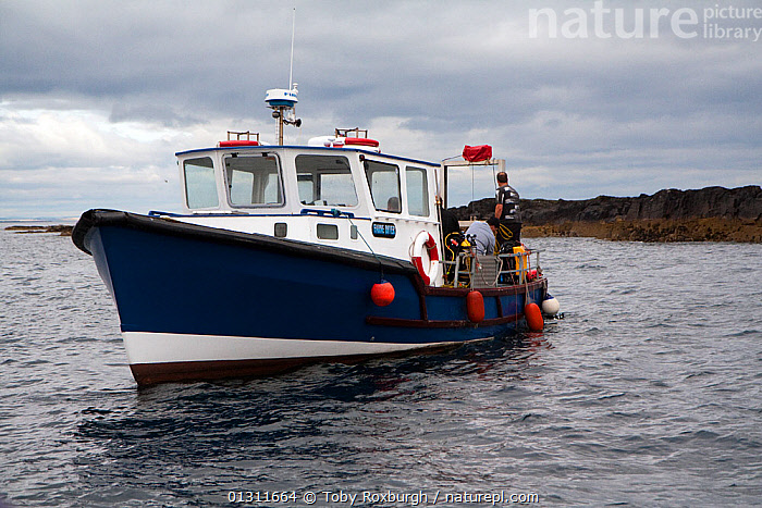 Dive boat off the Farne Islands, Northumberland, England, July 2010., BOATS,COASTS,DIVE BOATS,ENGLAND,EUROPE,FENDERS,FRONT VIEWS,PEOPLE,UK,WORKING BOATS,BOAT-PARTS,United Kingdom,core collection xtwox, Toby Roxburgh