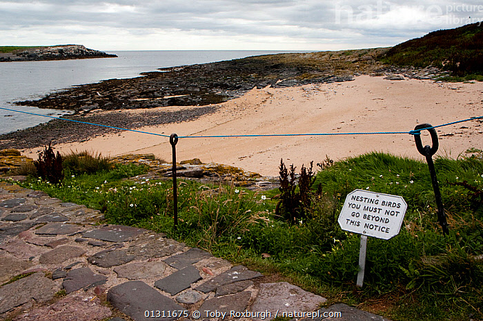 Notice advising visitors to Inner Farne not to go on the beach to avoid disturbing a colony of nesting Arctic terns (Sterna paradisaea), Farne Islands, Northumberland, England, July 2010., BEACHES,BIRDS,COASTS,CONSERVATION,ENGLAND,ENVIRONMENTAL,EUROPE,FENCE,FENCES,LANDSCAPES,NESTS,RESERVE,SIGNS,UK,WARNING,United Kingdom, Toby Roxburgh