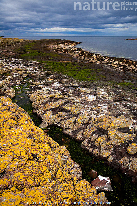 Rocky shore on Inner Farne, Farne Islands, Northumberland, England, July 2010.  ,  ATMOSPHERIC,BEACHES,COASTS,ENGLAND,EUROPE,LANDSCAPES,ROCKS,TIDEPOOLS,UK,VERTICAL,United Kingdom,core collection xtwox  ,  Toby Roxburgh