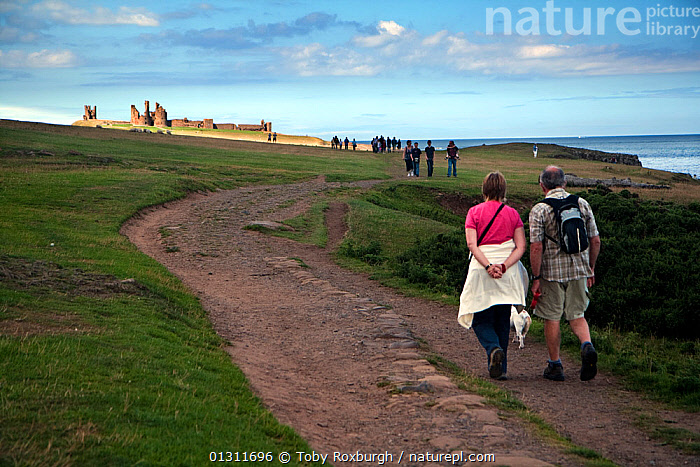 People walking along the coast path between Dunstanburgh Castle and Craster Harbour, Northumberland Coast Area of Outstanding Natural Beauty (AONB), England, July 2010., BUILDINGS,CASTLES,CLIFFS,COASTS,COUPLES,EUROPE,FOOTPATHS,HIKING,LANDSCAPES,LEISURE,PATH,PATHS,PEOPLE,RESERVE,UK,WALKING,Geology,United Kingdom, Toby Roxburgh