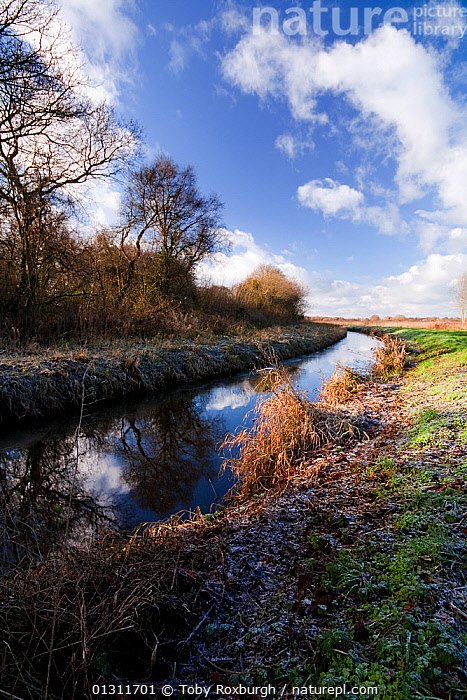 Rhyne (drainage ditch) in the Ham Wall RSPB National Nature Reserve (NNR), Somerset, England, December 2009., COUNTRYSIDE,DITCHES,DRAINAGE,ENGLAND,EUROPE,LANDSCAPES,REFLECTIONS,RESERVE,STREAMS,TREES,UK,VERTICAL,WATER,WINTER,PLANTS,United Kingdom, Toby Roxburgh