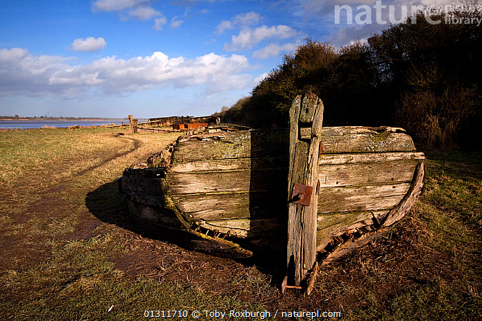 """Transom of the """"Harriet"""", a Kennet barge beached in 1956 on the banks of the River Severn, one of many beached to help stablise the shore from erosion, Gloucesterhire, England, January 2010., BARGES,BOATS,DRY LAND,ENGLAND,ENVIRONMENTAL,EROSION,EUROPE,RIVERS,UK,WOODEN,WRECKS,United Kingdom, Toby Roxburgh"""