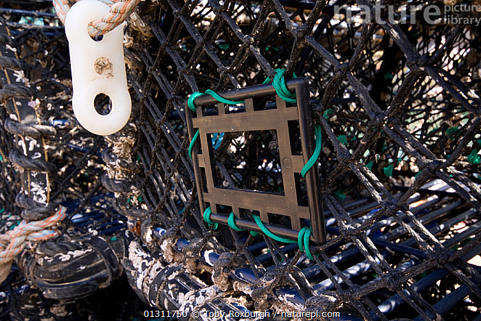 Escape hatch on a lobster pot, added to improve size-selectivity, Brixham, Devon, England.  ,  CAGE,CAGES,ENGLAND,EQUIPMENT,EUROPE,FISHING,INTERESTING,LOBSTER POTS,LOBSTERS,SIZE,UK,United Kingdom  ,  Toby Roxburgh