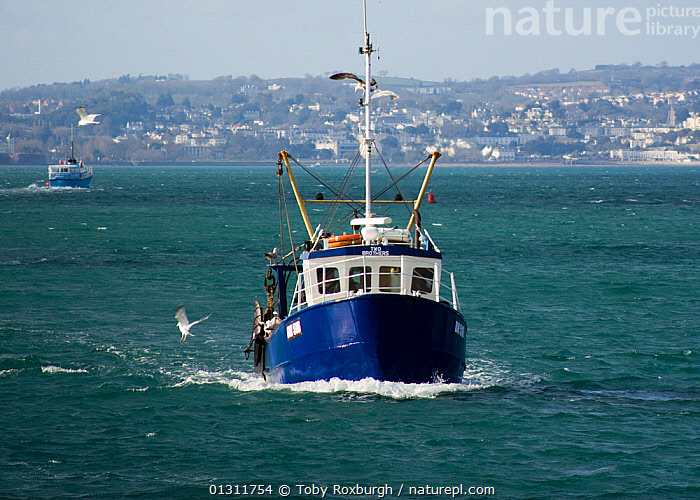 Small fishing trawler day-boat returning to Brixham Harbour to land its catch, Devon, England., BOATS,COASTS,EUROPE,FISHING BOATS,FRONT VIEWS,TOWNS,TRAWLERS,UK,WORKING BOATS,ENGLAND,WORKING-BOATS ,United Kingdom,core collection xtwox, Toby Roxburgh