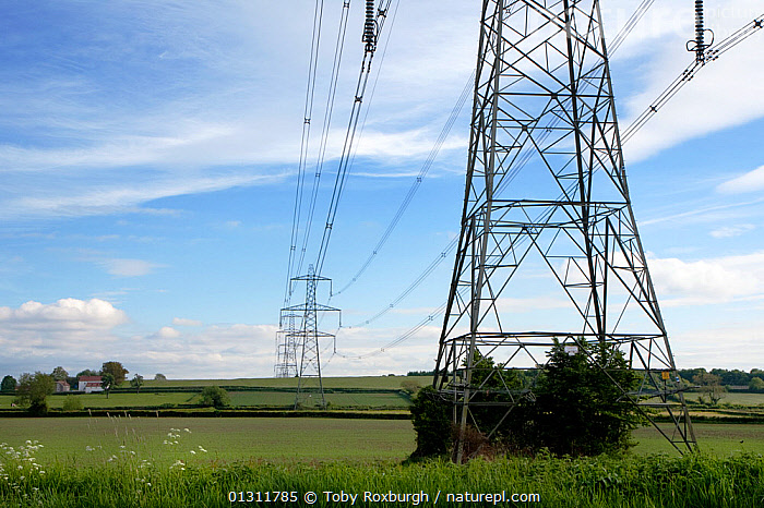 Electricity pylons crossing farmland, England, May 2010., COUNTRYSIDE,ELECTRICITY,ENERGY,ENVIRONMENTAL,EUROPE,FARMLAND,LANDSCAPES,MASTS,PYLON,UK,BOAT-PARTS,United Kingdom, Toby Roxburgh