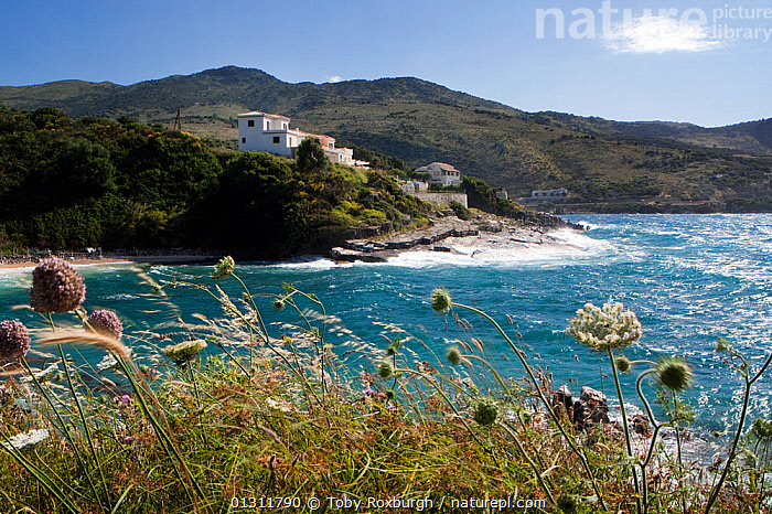 Flower heads growing on the coast next to Pipitos Bay, northeast Corfu, Greece, June 2010., BUILDINGS,CLIFFS,COASTS,CORFU,EUROPE,FLOWERS,GREECE,HOMES,ISLANDS,LANDSCAPES,MEDITERRANEAN,MOUNTAINS,WIND,Geology,Weather, Toby Roxburgh