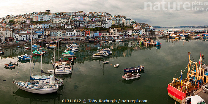 Panoramic view of Brixham Harbour, Devon, England, Septemper 2009. Digital composite.  ,  BOATS,COASTS,COLOURFUL,ENGLAND,EUROPE,HARBOURS,LANDSCAPES,MIXED BOATS,MOORED,MOTORBOATS,PANORAMIC,SAILING BOATS,TOWNS,UK,YACHTS,United Kingdom  ,  Toby Roxburgh