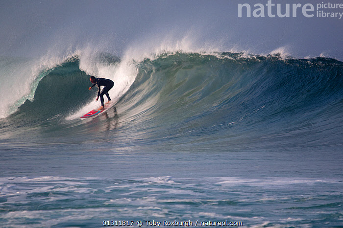 Surfer on a wave in Booby's Bay, Cornwall, England, August 2010., COASTS,ENGLAND,EUROPE,EXTREME,LEISURE,MAN,PEOPLE,SPORTS,SPRAY,SURFING,UK,WATERSPORTS,WAVES,United Kingdom, Toby Roxburgh
