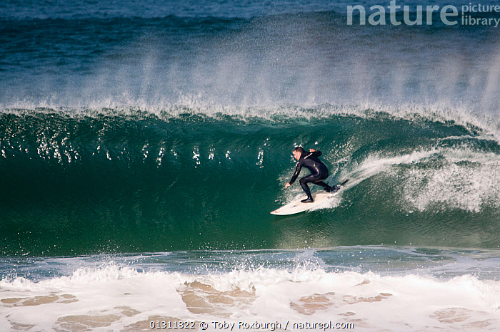 Surfer on a wave in Booby's Bay, Cornwall, England, August 2010., BREAKING,COASTS,ENGLAND,EUROPE,EXTREME,MEN,PEOPLE,PROFILE,SPEED,SPORTS,SPRAY,SURFING,UK,WATERSPORTS,WAVES,United Kingdom, Toby Roxburgh