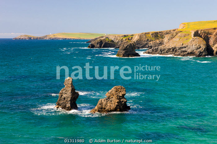 Rock stacks and turquoise Atlantic ocean, viewed from cliffs above Porthcothan, looking towards Trevose Head, north Cornwall, England. May 2009, ATLANTIC,BLUE,CLIFFS,COASTS,EUROPE,LANDSCAPES,OCEANS,ROCKS,SEA,UK,Geology,United Kingdom, Adam Burton
