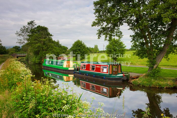 Narrowboats moored on the Monmouthshire and Brecon Canal near Llanfrynach, Brecon Beacons National Park, Powys, Wales, UK. June 2009, BOATS,BRECON BEACONS,CANAL BOATS,CANALS,COUNTRYSIDE,EUROPE,LANDSCAPES,LEISURE,MOORED,NP,RECREATIONAL,REFLECTIONS,RURAL,SUMMER,UK,UPLAND,WATER,National Park,WALES,United Kingdom,core collection xtwox, Adam Burton