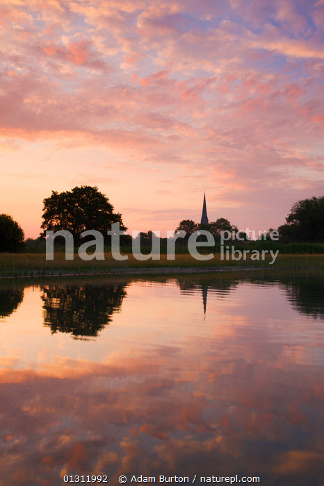 Salisbury Cathedral spire and dawn sky reflected in a pond, Salisbury, Wiltshire, England. July 2009., BUILDINGS,CATHEDRALS,DAWN,EUROPE,LANDSCAPES,PINK,PONDS,REFLECTIONS,SKIES,SPIRES,SUMMER,UK,VERTICAL,WATER,United Kingdom,ENGLAND, Adam Burton